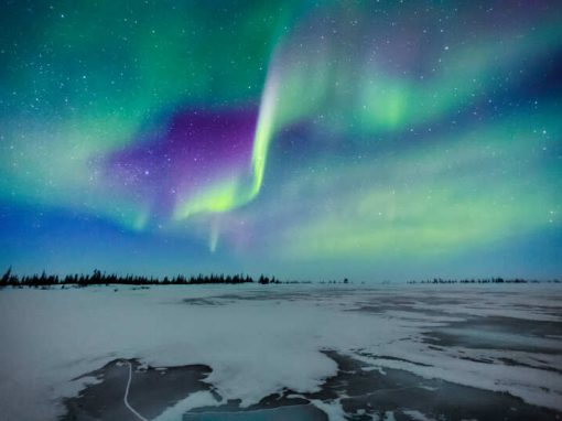 Chasing White Polar Bears & Northern Lights