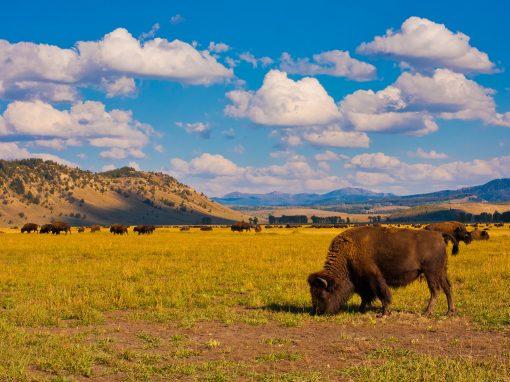 Wild Wild West, A family adventure