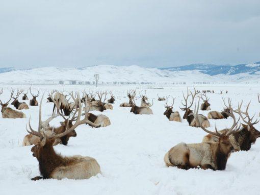 Wild Wild West, A winter adventure