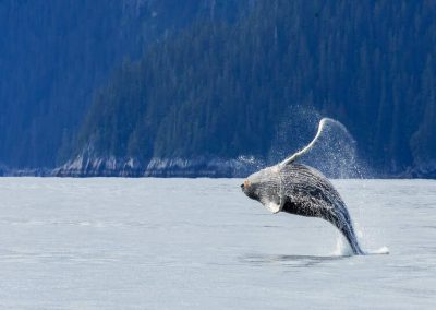 Highlights of Alaska, the perfect family trip