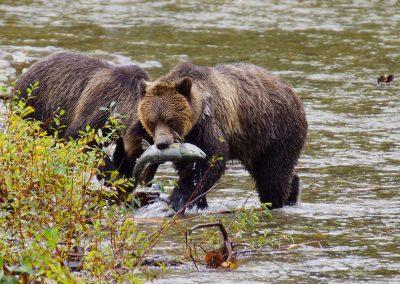 A Family adventure in British Columbia