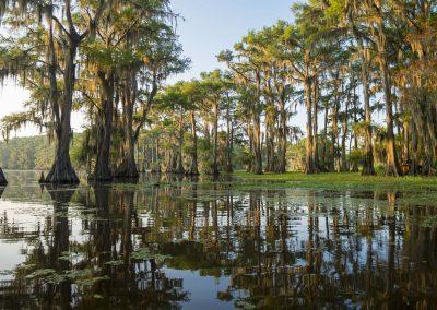 Jazz, bayous & Plantations